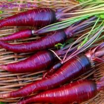 Морковь «Драгон»