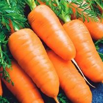 Морковь «Каротель»