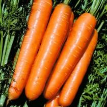 Морковь «Сладкая зима»