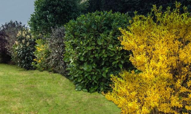 8 лучших декоративных кустарников, цветущих весной