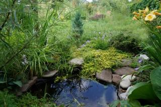 В этом укромном уголке со временем появился маленький водоем в природном стиле