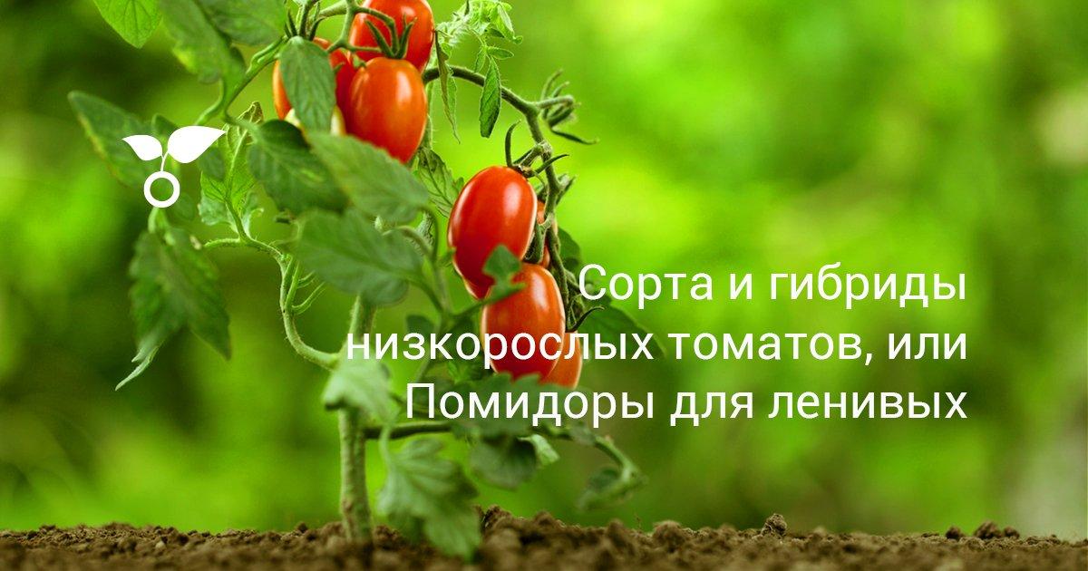 Сорта томатов японской селекции
