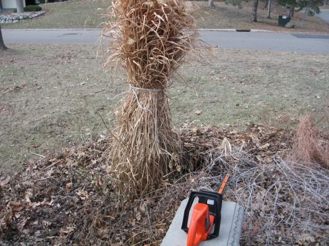 Перед обрезкой декоративных трав очень желательно туго связать старые листья в пучки