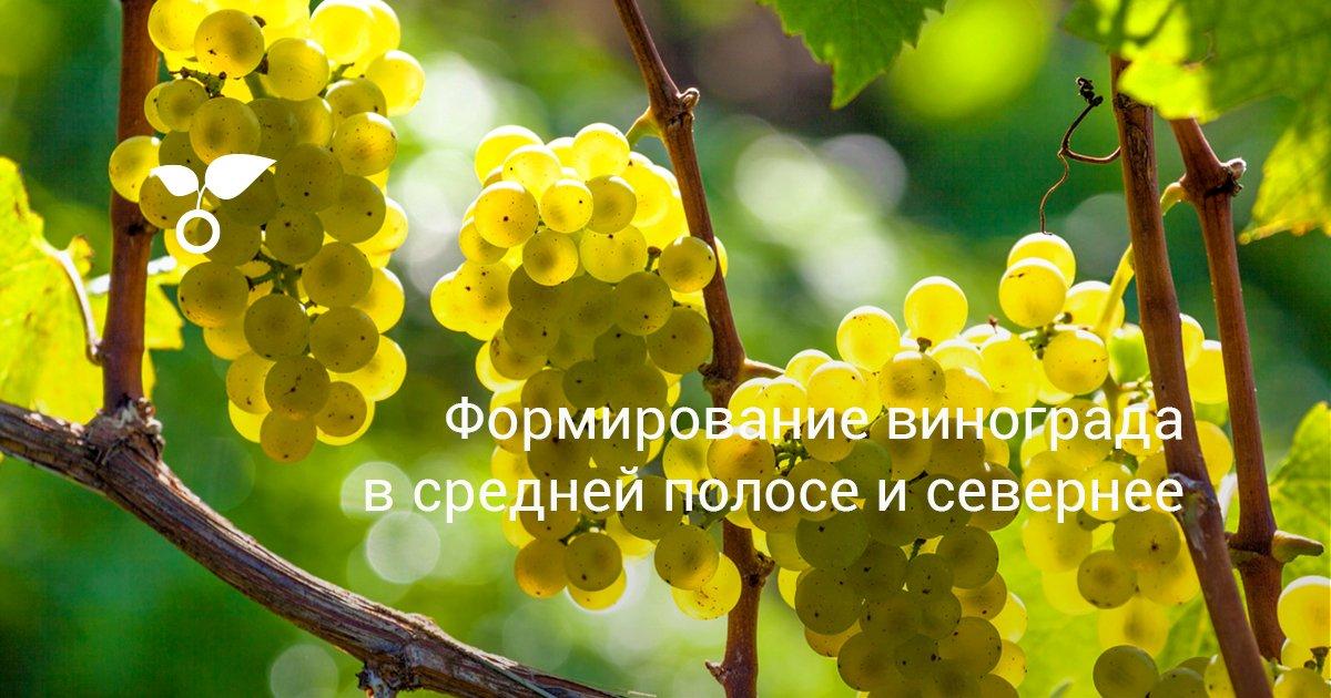 Виды формировки винограда арочная и безопорная метод Гойо