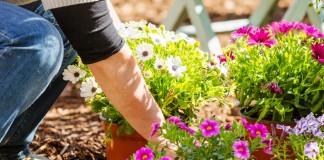 Лунный календарь посева цветов в июне