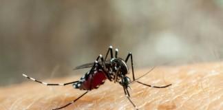 «Комароед» — очистит участок от комаров