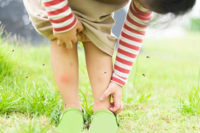 У детей и людей с нежной кожей на месте укусов появляются настоящие волдыри