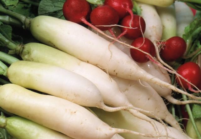 Редька — какая бывает и как выращивать