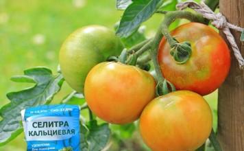 Кальций – необходимый для всех растений, без исключения, элемент