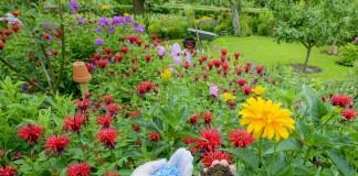 Чем удобрять декоративные и плодовые растения во второй половине лета?