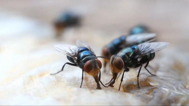 Борьба с мухами – задача, которую приходится решать практически всем – и горожанам, и дачника