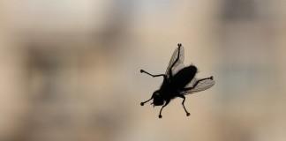 Лето без мух — самые эффективные и безопасные средства