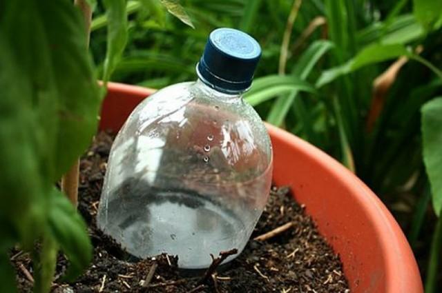 Обязательно закрывайте бутылки для самодельного капельного полива пробками, иначе вода будет просачиваться сквозь проколы за считанные минуты