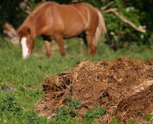 Чтобы избежать накопления нитратов в овощах на своих грядках, необходимо прекратить вносить навоз за 1,5 месяца до момента снятия урожая