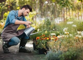 Безопасная защита растений от болезней и вредителей в июле и августе