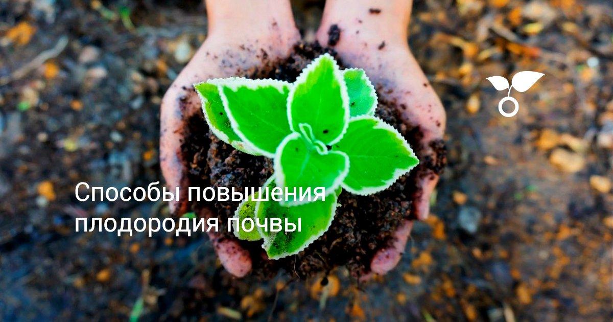 Пять шагов для повышения плодородия почвы — AgroXXI