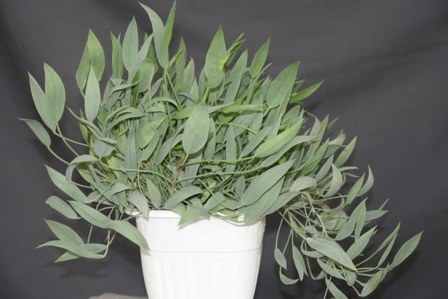 Пеларгония ланцетная (Pelargonium lanceolatum)