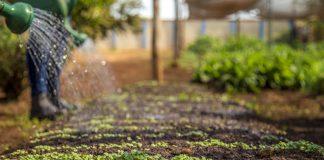 Что посеять в начале осени, чтобы собрать урожай до зимы?