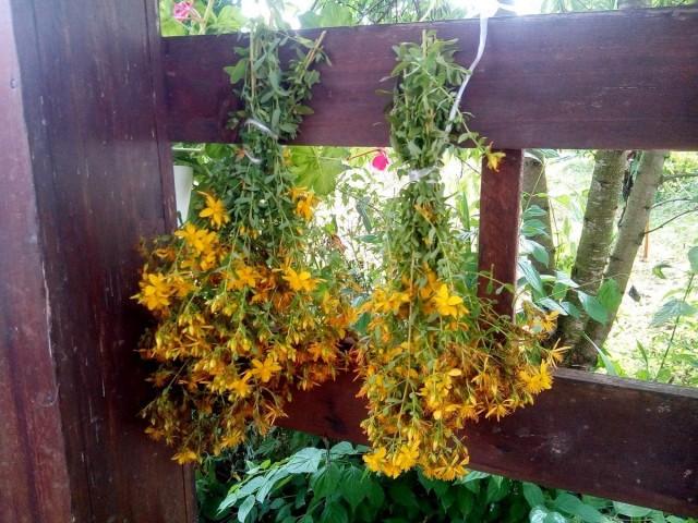 Я использую самый простой способ сушки — нетуго связываю растения в маленькие венички и вешаю на улице, на летней веранде