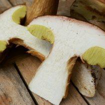 Молодой белый гриб в разрезе
