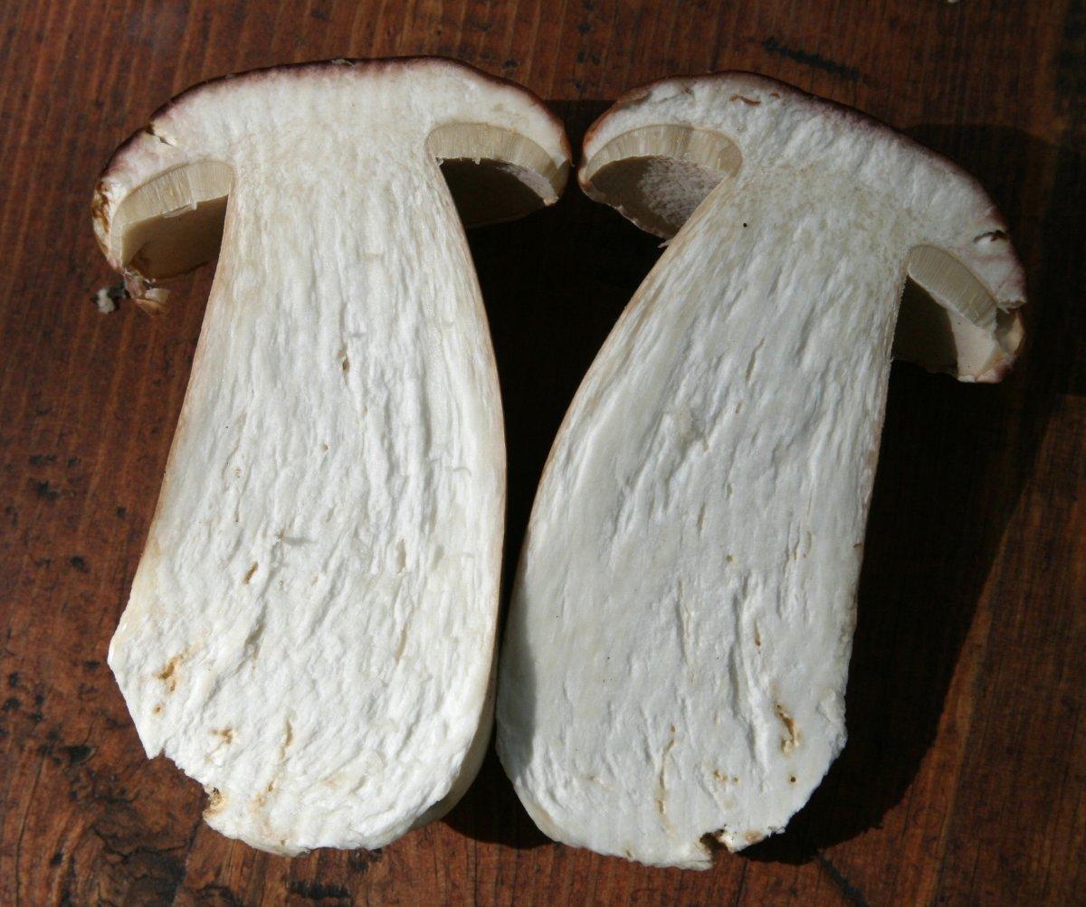 того, белый гриб в разрезе фото остро