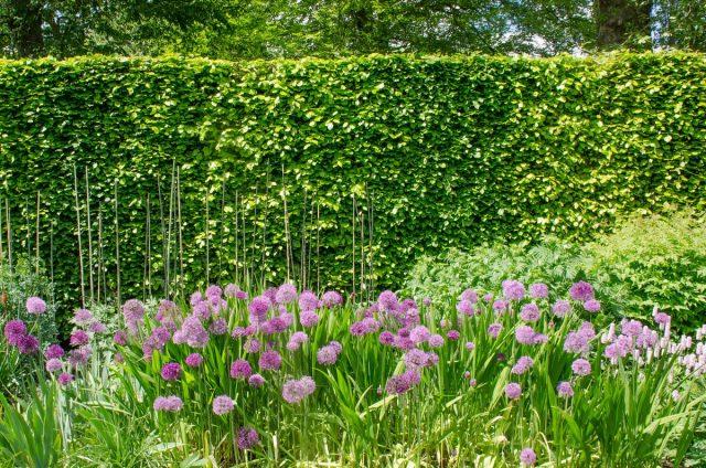 Лучшие растения для защиты участка от шума