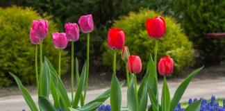 Где посадить весенние луковичные? 5 правильных решений