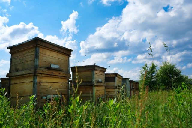 Вылетать из улья и пролетать первые метры пчёлки должны на родном участке, а не над соседями или дорогой