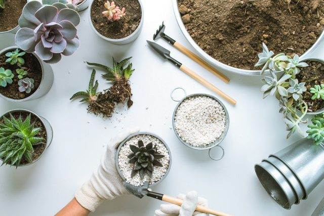 Независимо от того о крупных или маленьких растениях идет речь, мульча только улучшает условия их содержания