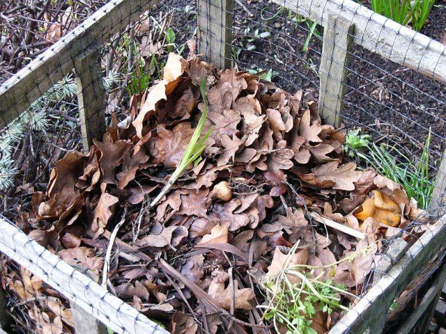Я сначала обираю сухие и зеленые надземные части растений с грядок в одном месте, а потом ими же прикрываю землю
