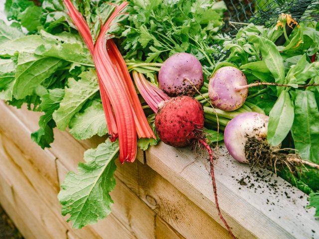 Плохая почва — не проблема, или Как я выращиваю овощи в траве
