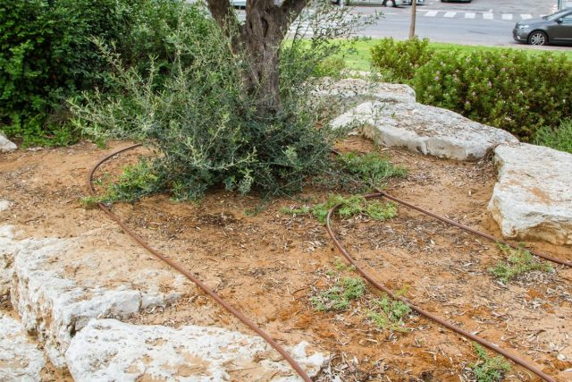 Капельный полив на израильских улицах