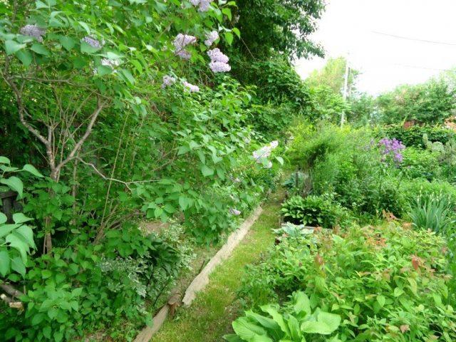 Наш участок в Хабаровском крае, который окультуривался более 30 лет, в июне