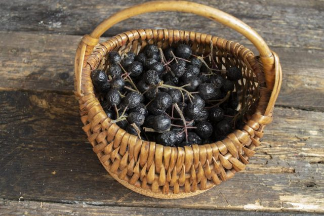 Собираем аронию, обрываем ягоды с грозди