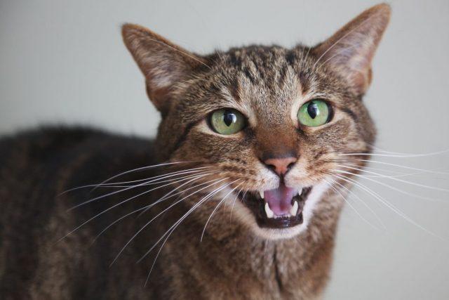 Нельзя стричь кошке усы