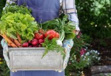 Как повысить плодородие почвы без навоза и минеральных удобрений?