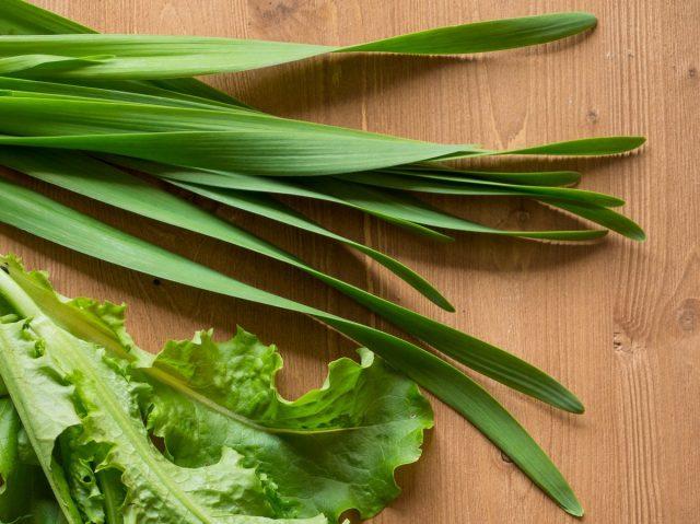 Витаминная зелень лука-слизуна становится доступной сразу после того, как сойдет снег