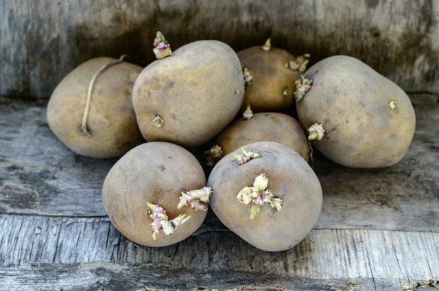 Прорастая, картофель накапливает токсичные вещества хаконин и соланин