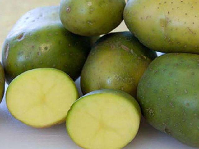 После длительного хранения, обычно ближе к весне, некоторые клубни картофеля приобретают зелёную окраску