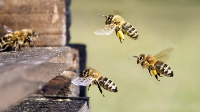 Цены на «пакет» пчёл колеблются вокруг 4000 рублей