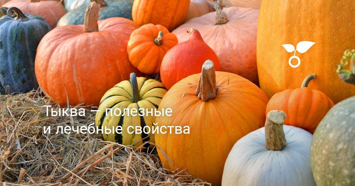Полезные свойства листьев тыквы