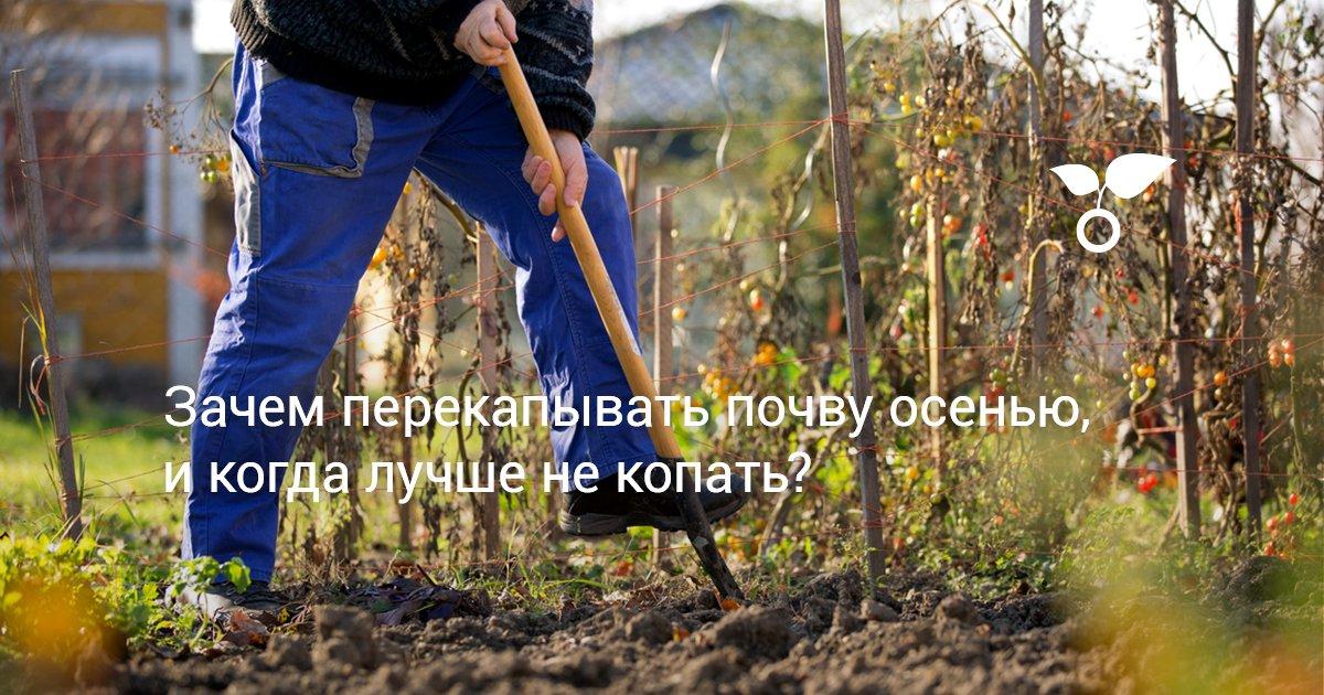 Зачем нужно перекапывать землю осенью