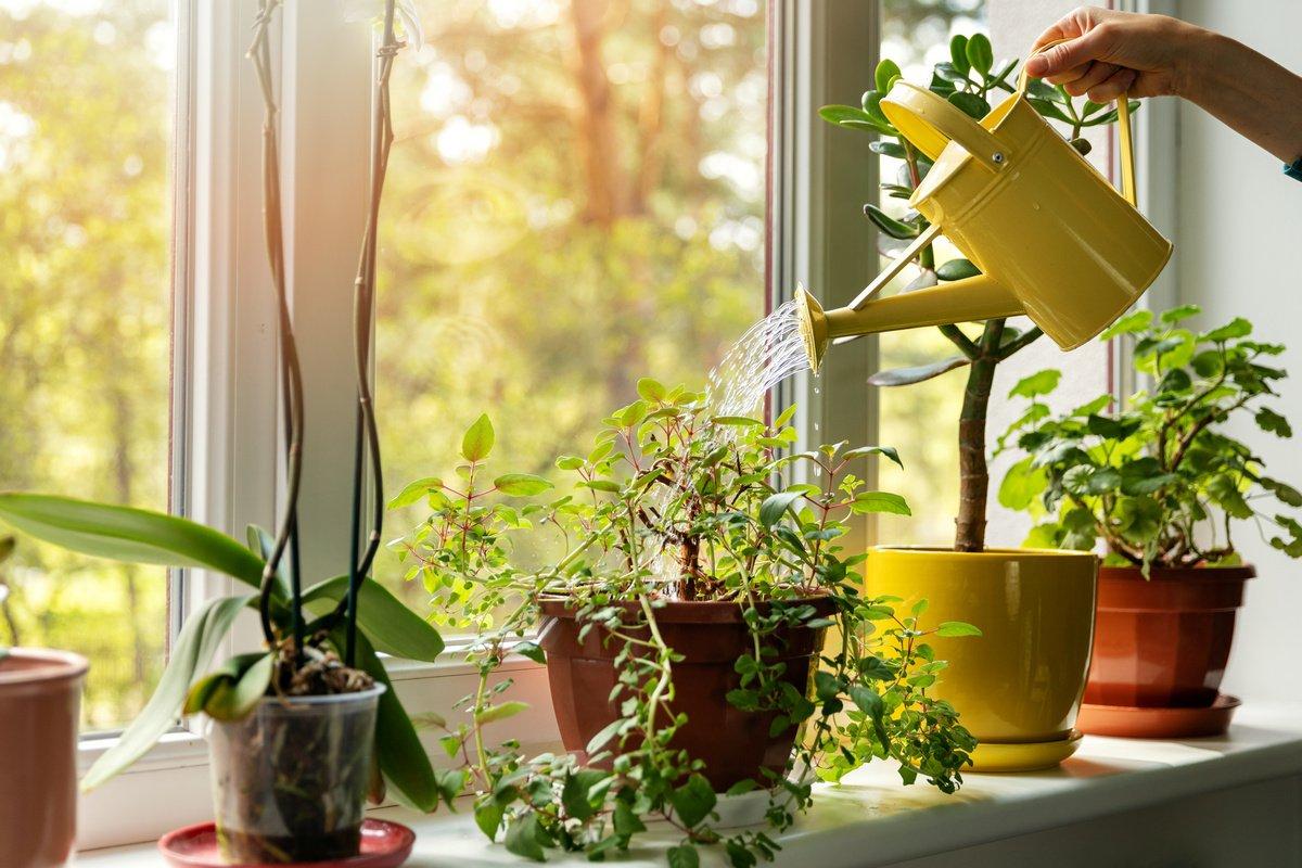 10 главных правил полива комнатных растений. Фото — Ботаничка.ru