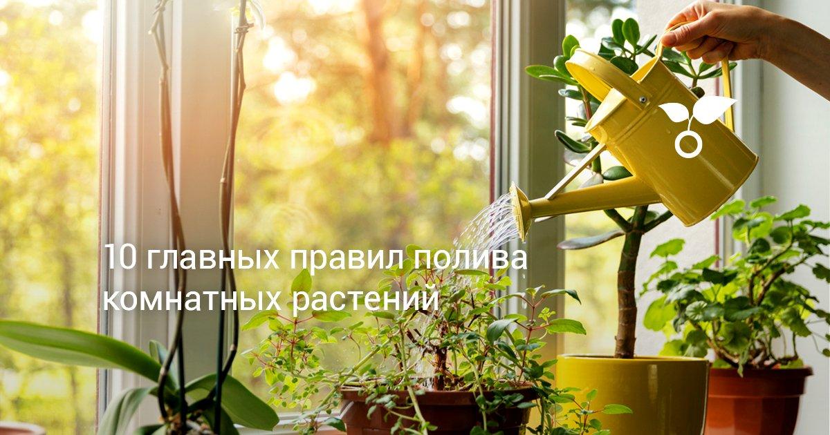 Как часто необходим полив комнатных растений    Виды полива комнатных растений