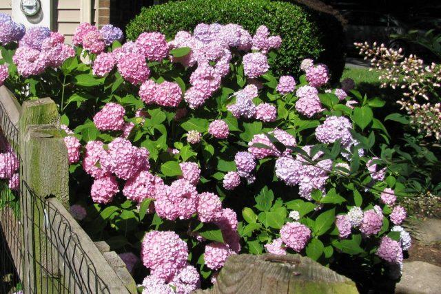 Большая ошибка — посадка теневыносливых растений на солнцепек