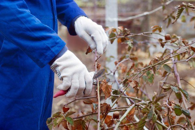 Как подготовить сад к зиме? 8 самых важных дел