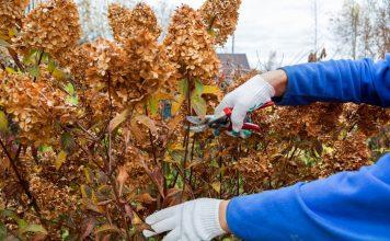Какие растения нельзя обрезать на зиму, а какие — необходимо?