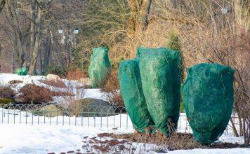 Когда и как правильно укрывать растения на зиму?