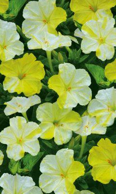 Лучшие садовые цветы от агрохолдинга «Поиск»