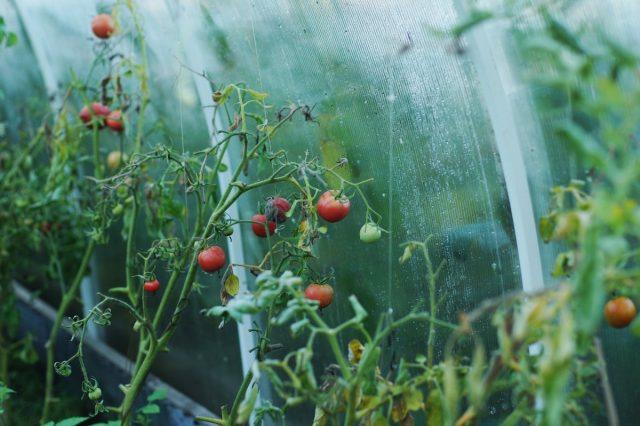 Недостаток микроэлементов у растений — как с этим бороться?